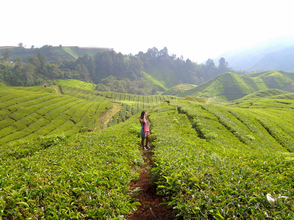 essay about trip to cameron highlands Free essays on trip to cameron highland get help with your writing 1 through 30.